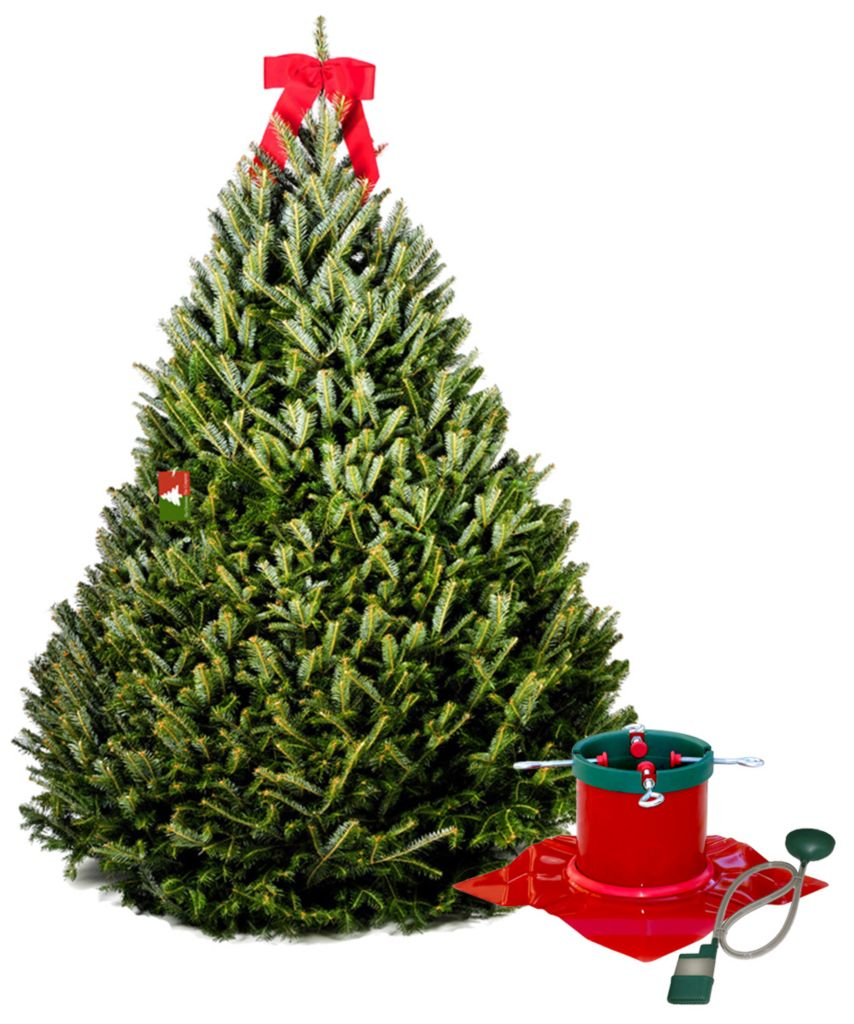 434-008 - The Christmas Tree Company 6.5-7' Fraser Fir Christmas Tree & Signature Tree Stand