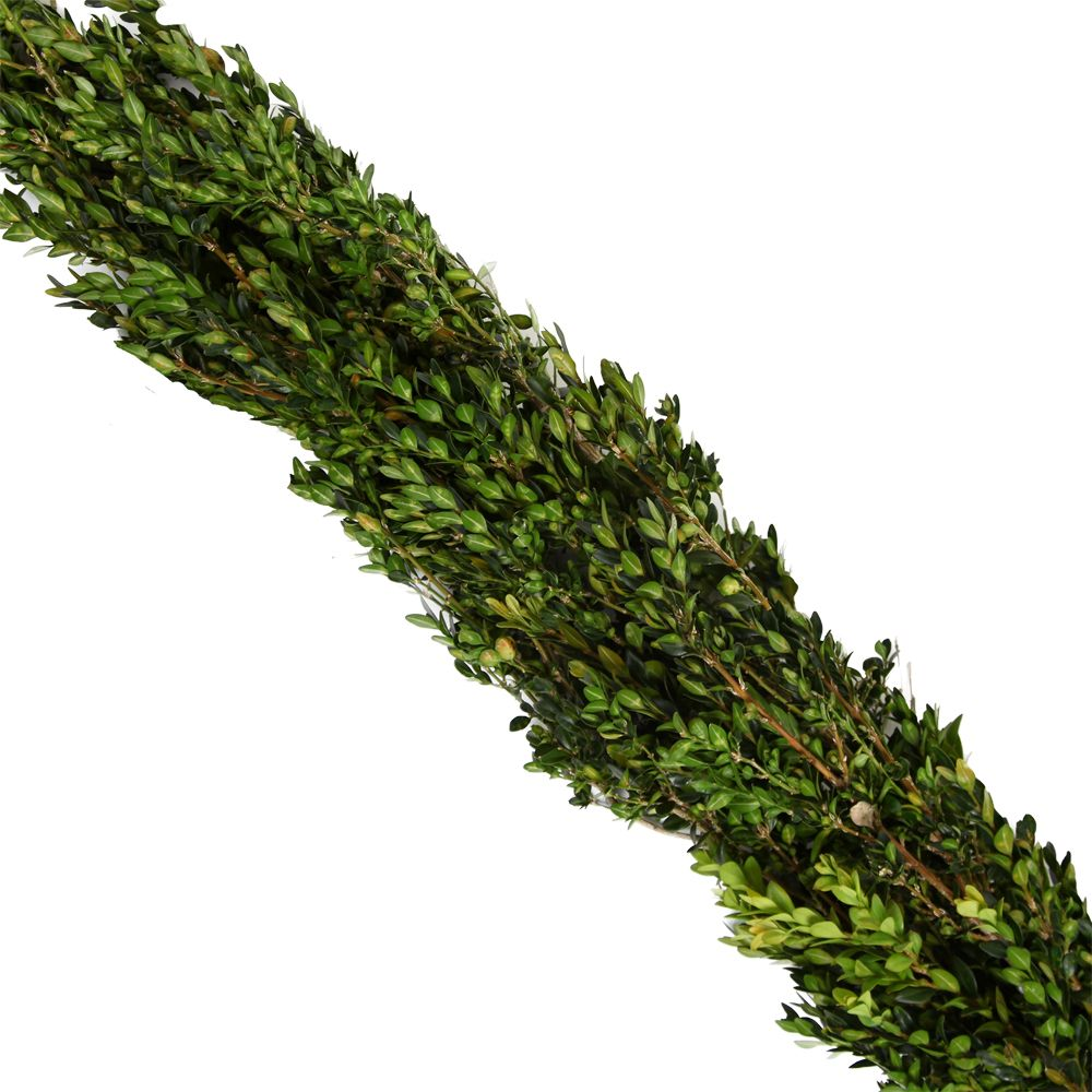 434-038 - The Christmas Tree Company 25' Fresh Boxwood Premium Holiday Garland