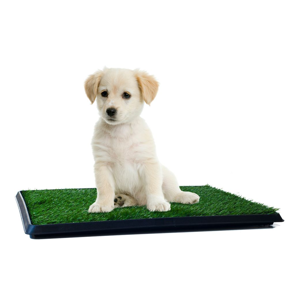 445-646 - PAW™ The Indoor Restroom for Pets Puppy Potty Trainer