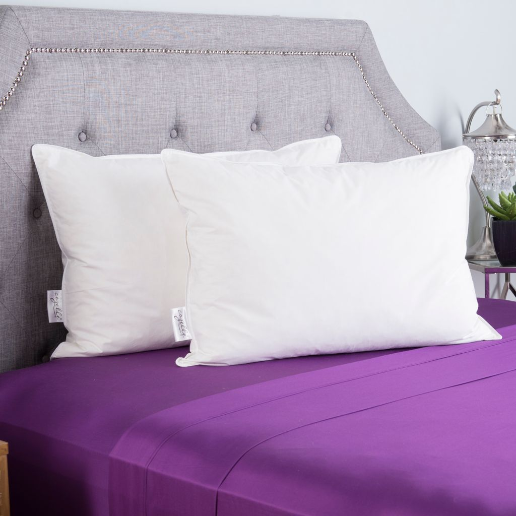 446-558 - North Shore Linens™ 230TC Cotton & Duck Feather Pillow Pair
