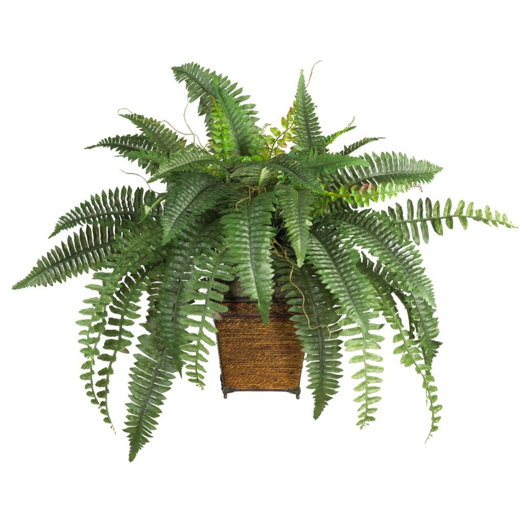"446-943 - 23"" Boston Fern Silk Plant w/ Wicker Basket"