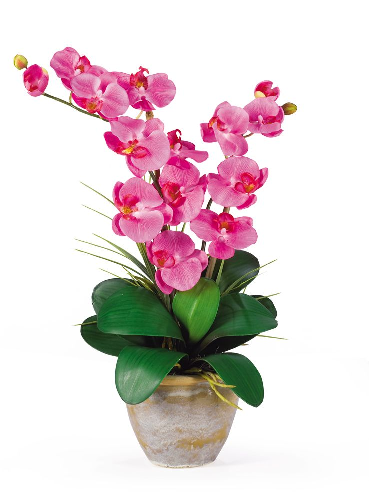 "446-955 - 25"" Double Phalaenopsis Silk Orchid Flower Arrangement"