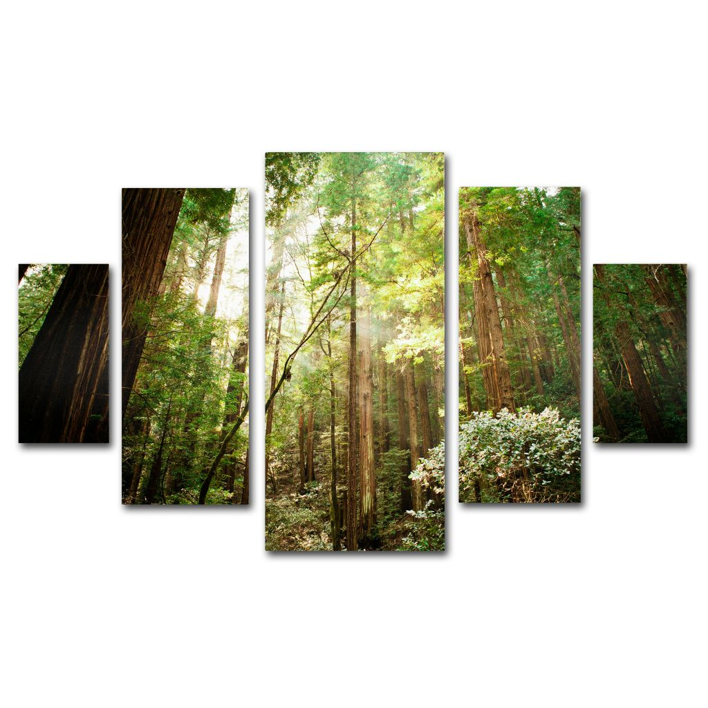 "448-620 - Ariane Moshayedi ""Muir Woods"" Multi Panel Canvas Gallery Wrap Set"