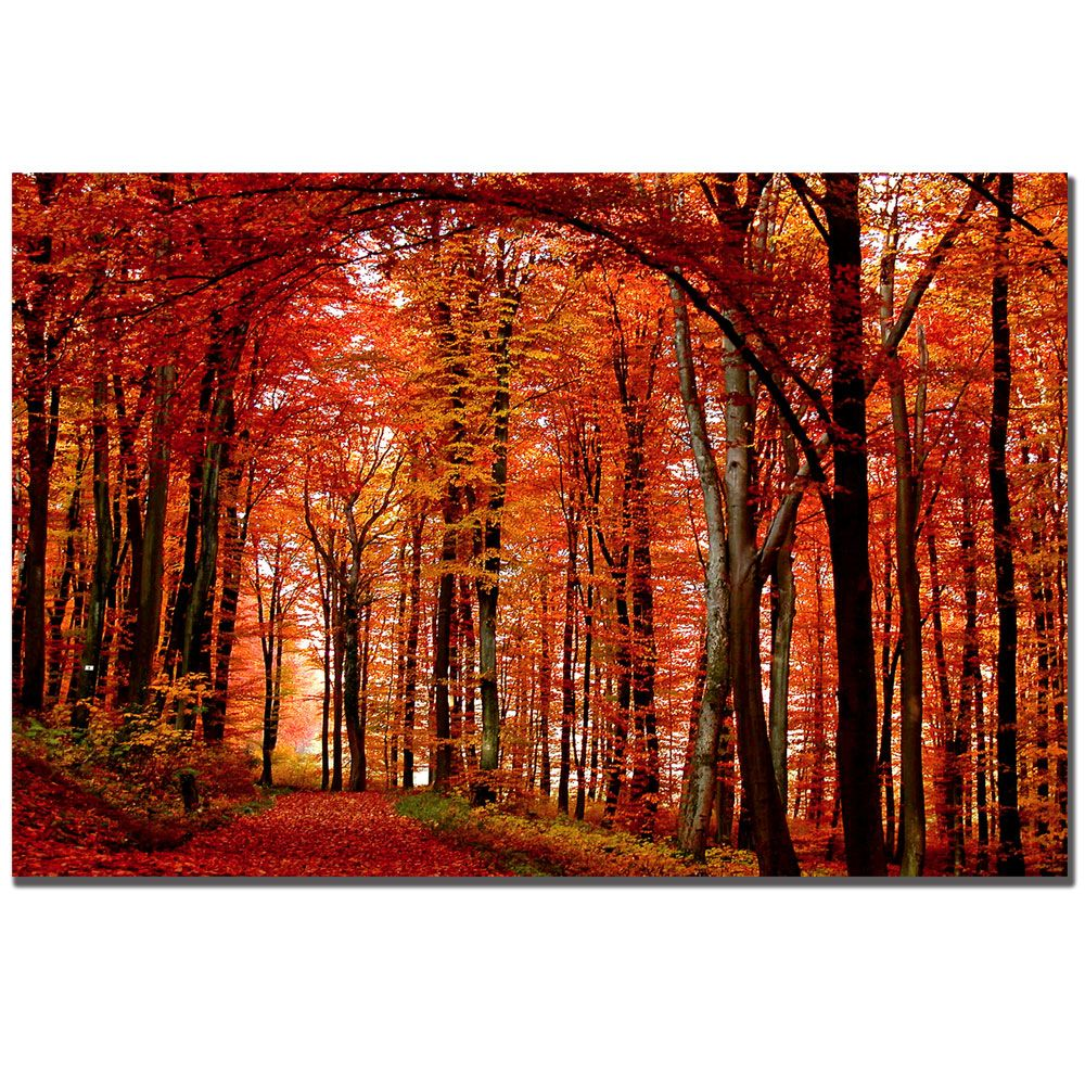 "448-635 - Philippe Sainte-Laudy ""Red Way"" 30"" x 47"" Ready to Hang Canvas Art"