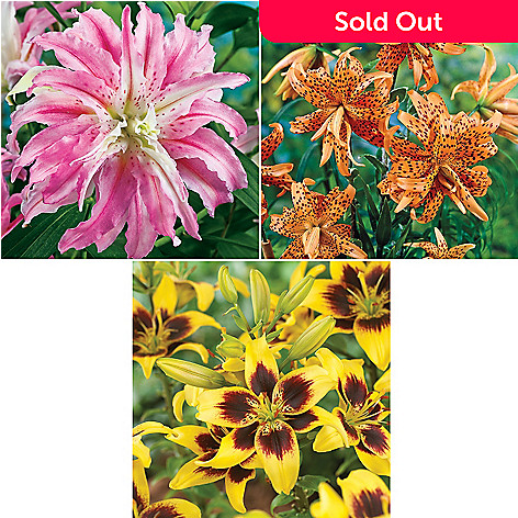 443-634 - Spring Hill Nurseries 10-Piece ''Pieton'', ''Flore Pleno'' & ''Broken Heart'' Lily Collection