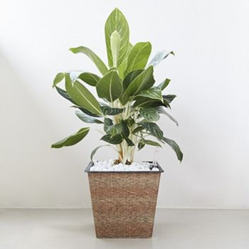 Home Web Exclusives All Under $30 - 484-591 Vifah Hatteras Choice of Size Self-Watering Planter - 484-591